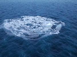 whale_00163a